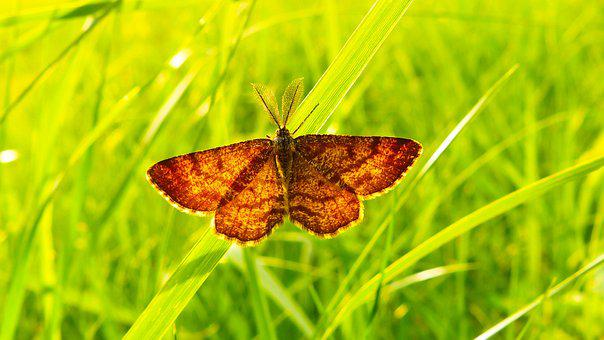 Nature, Butterfly Day, Insect, Summer, Plant, Animals