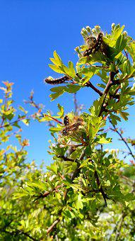 Caterpillars, Spring, Nature, Green, Blue Sky
