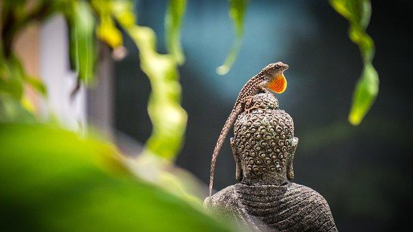 Nature, Fauna, Outdoor, Animal, Close Up, Color