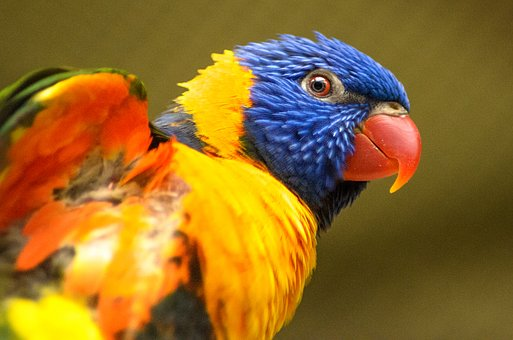 Bird, Nature, Wildlife, Color, Animal, Parrot, Feather