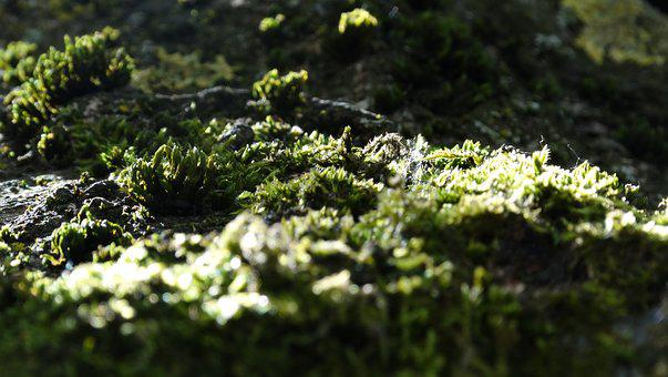 Moss, Cortex, Tree, Nature, Forest, Texture, Surface