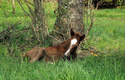 Animal, Mammal, Foal, Domestic Animal, Equine, Prairie