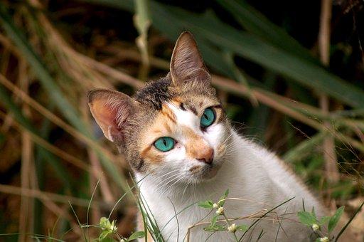 Cute, Nature, Animal, Portrait, Little, Cat, Pet, Eyes