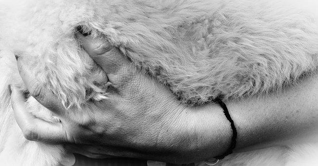 Hand, Fur, Sheepskin, Wool, Fluffy, Love For Animals