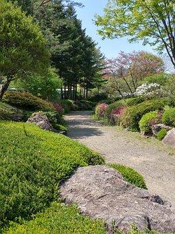 Nature, Wood, Leaf, Plants, Garden