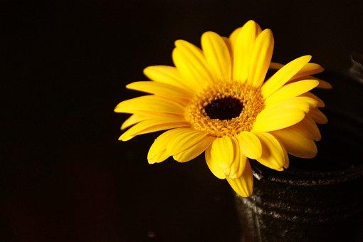 Yellow, Gerbera, Flower, Sun