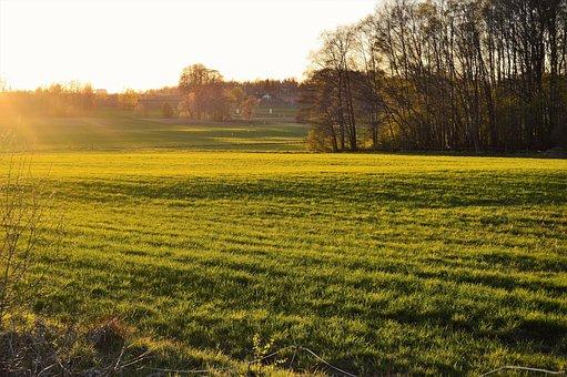Värnamo, Sweden, Osudden, Field, Go, Grass, Green