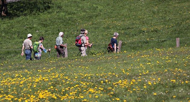 Hiking, Summer, Landscape, Hike, Wanderer, Scenic