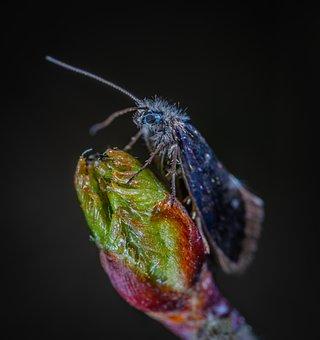 Insect, Nature, Krupnyj Plan, Bespozvonochnoe