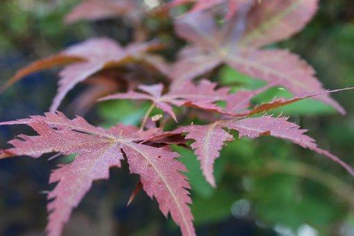 Leaf, Leaves, Jack Fruit Leaf, Nature, Plant, Fern, Eco