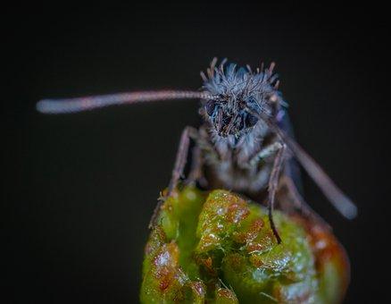 Insect, Bespozvonochnoe, Nature, Krupnyj Plan, Mustache