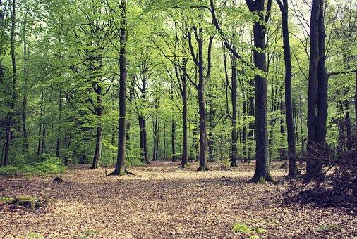 Nature, Tree, Landscape, Leaf, Season, Beech Forest