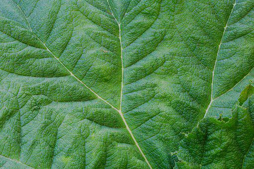 Leaf, Plant, Growth, Nature, Environment, Ecology