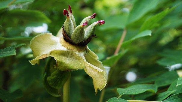 Magnolia Flower, Flowers, Korean Flower, Nature