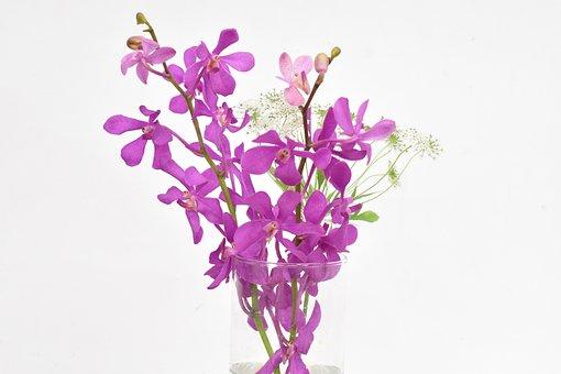Free, Plant, Natural, Flowers, Leaf, Pink Flower
