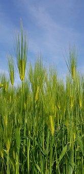 Barley Lawn, School Farm, Holidays, Nature, Plants