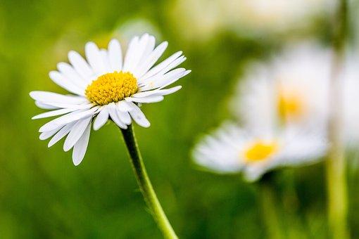 Nature, Plant, Flower, Summer, Prairie, Garden, Leaf