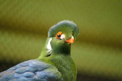 Bird, Nature, Wildlife, Animal, Feather, Beak, Wing