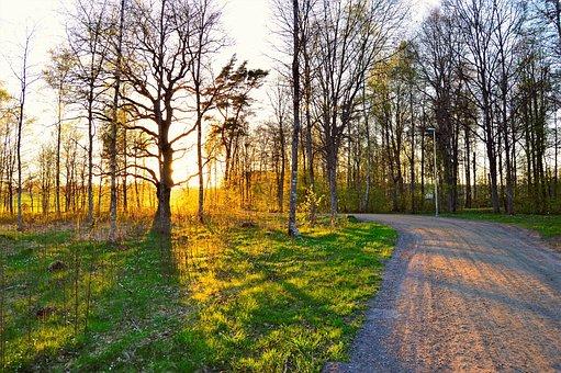Osudden, Värnamo, Sweden, Dirt Road, Sunset, Forest