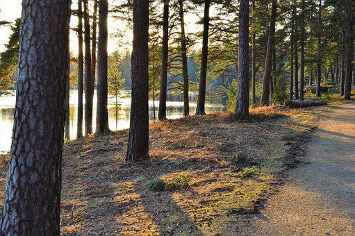 Prostsjön, Värnamo, Sweden, Outdoor, Forest, Water
