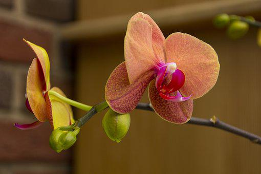 Orchid, Flower, Nature, Plant, Tropical, Exotic