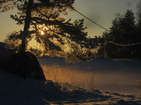 Landscape, Nature, Tree, Sunray, Rural, Ice, Cold