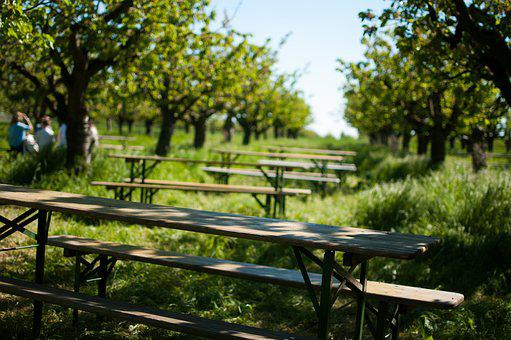 Orchard, Cherry Trees, Grass, Summer, Day, Table, Bench