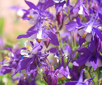 Flower, Plant, Nature, Garden, Sun
