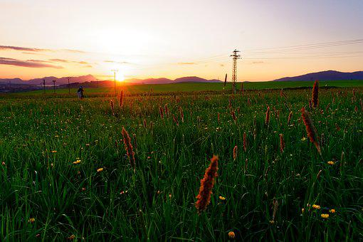Sunset, Sun, Nature, Liptov, Country, Meadow, Flowers