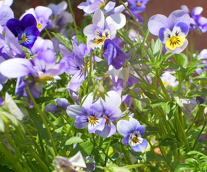 Flower, Nature, Plant, Leaf, Floral, Sun