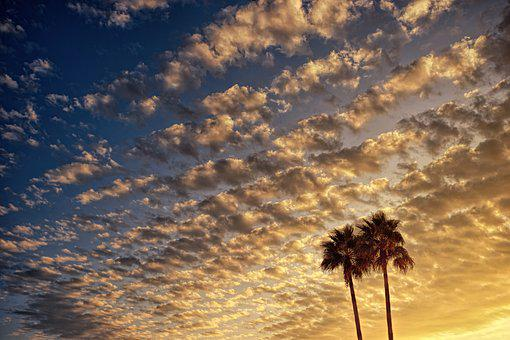 Clouds, Evening Sky, Palm Trees, Silhouette, Sunset