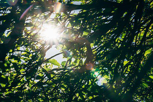 Tree, Leaf, Foliage, Ray, Sun, Sunshine, Sun Ray