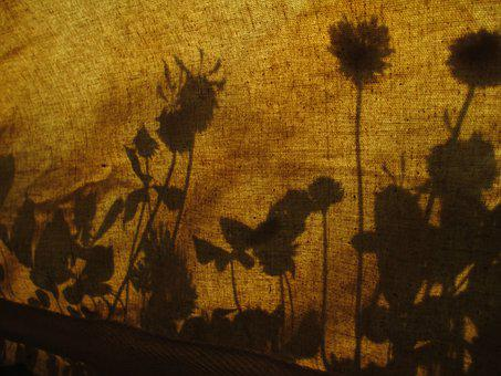 Shadow, Flowers, Floral, Nature, Outdoor, Tent