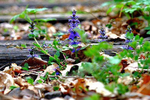 Nature, Leaf, Season, Plant, Wood, Track Bed, Track