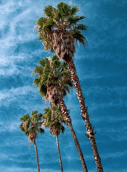 Palm Trees, Tropical, Summer, Sky, Vacation, Nature