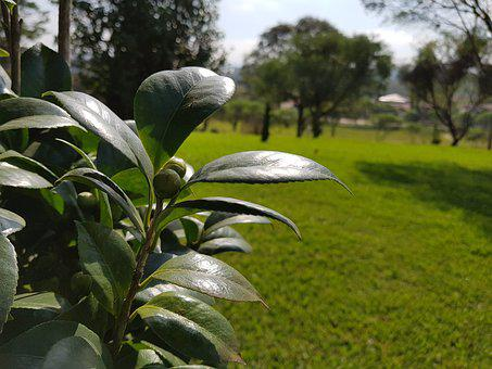 Green, Plant, Park, Foliage, Garden, Nature, Vegetation