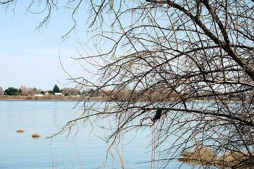 Tree, Nature, Winter, Season, Landscape, Branch, Sky