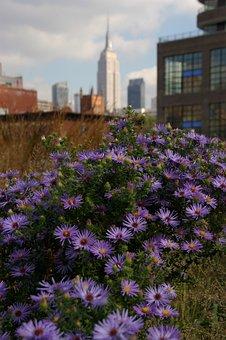 New York, High Line, Empire State Building, America