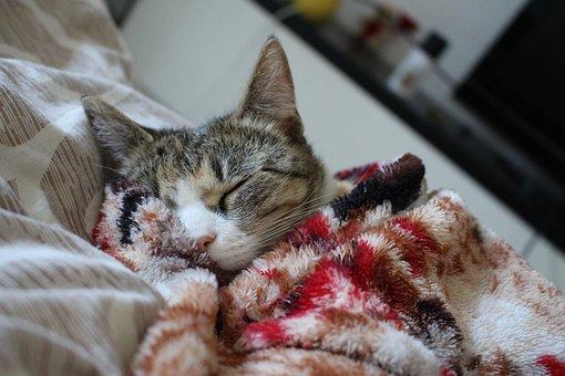 Cat, Sleeping Cat, Fluffy Cat, Pet, Animals, Grey Cat