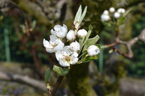 Flower, White, White Flower, Spring, Bloom, Bianca