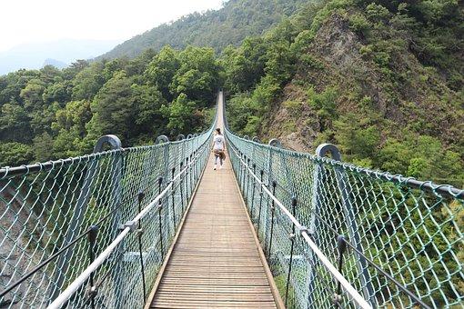 Suspension Bridge, Tree, Bridge