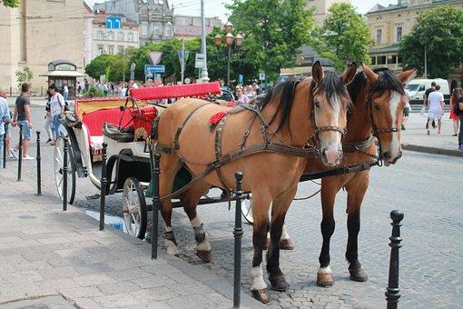 Coach, Street, Megalopolis, Ukraine, Lviv, Horse