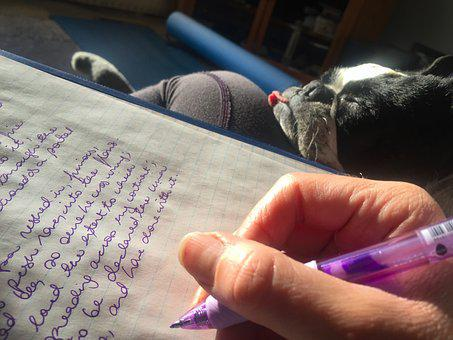 Homework, Composition, Writing, Boston Terrier, Pen
