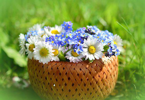 Daisy, Forget Me Not, Spring, Spring Flowers, Meadow