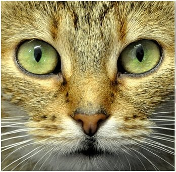 Cat's Eyes, Mieze, Animal Shelter, Cat, Domestic Cat