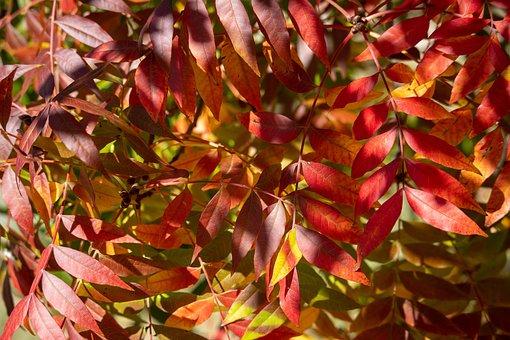 Autumn, Fall, Nature, Leaf, Season, Yellow, Orange