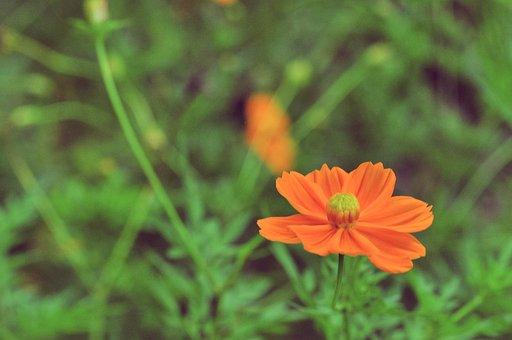 Flowers, Plant, Land, Garden, Green, Spring, Nature