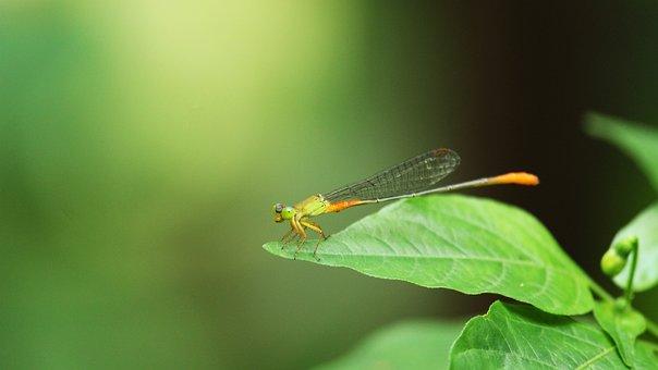 Fly, Insect, Green, Natur, Natural, Nature, Macro