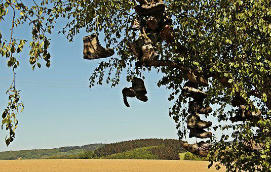 Tree, Hiking Shoes, Field, Landscape, Hiking