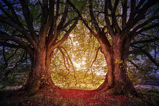 Tree, Nature, Hill, Heart, Light, Glow, Leaves, Twins